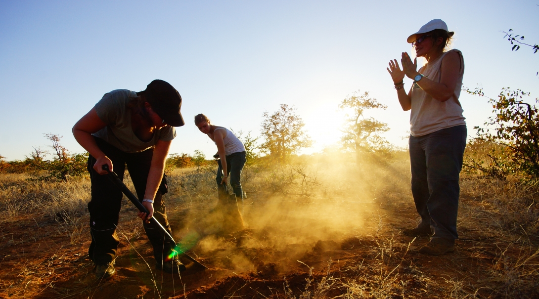 Projects Abroad wildlife conservation group volunteers in Botswana remove alien plant life